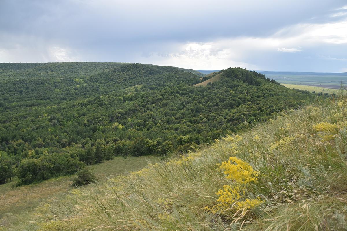 Лес Армейские Горы