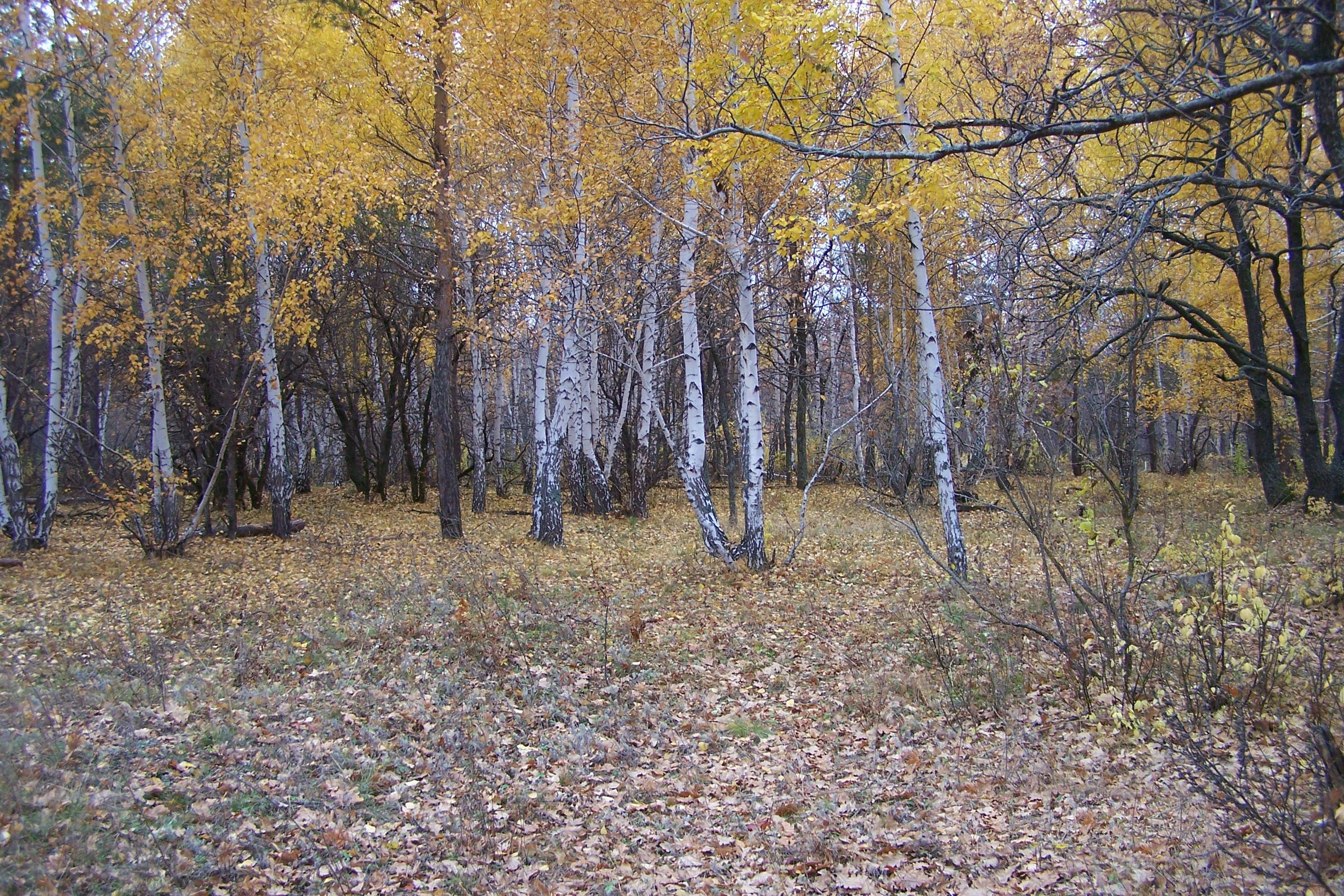 Вязовский лес