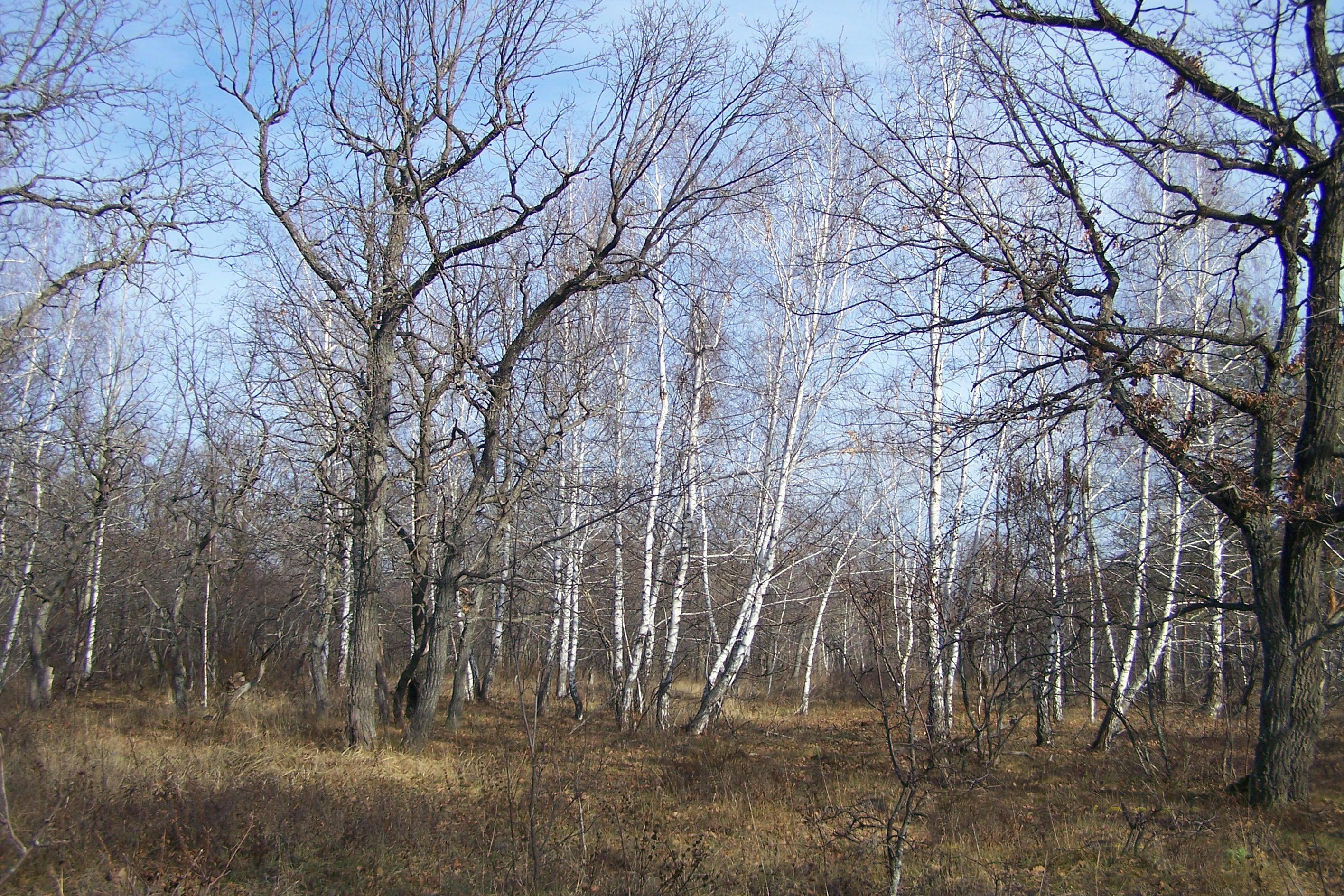 Губаревский лесной массив