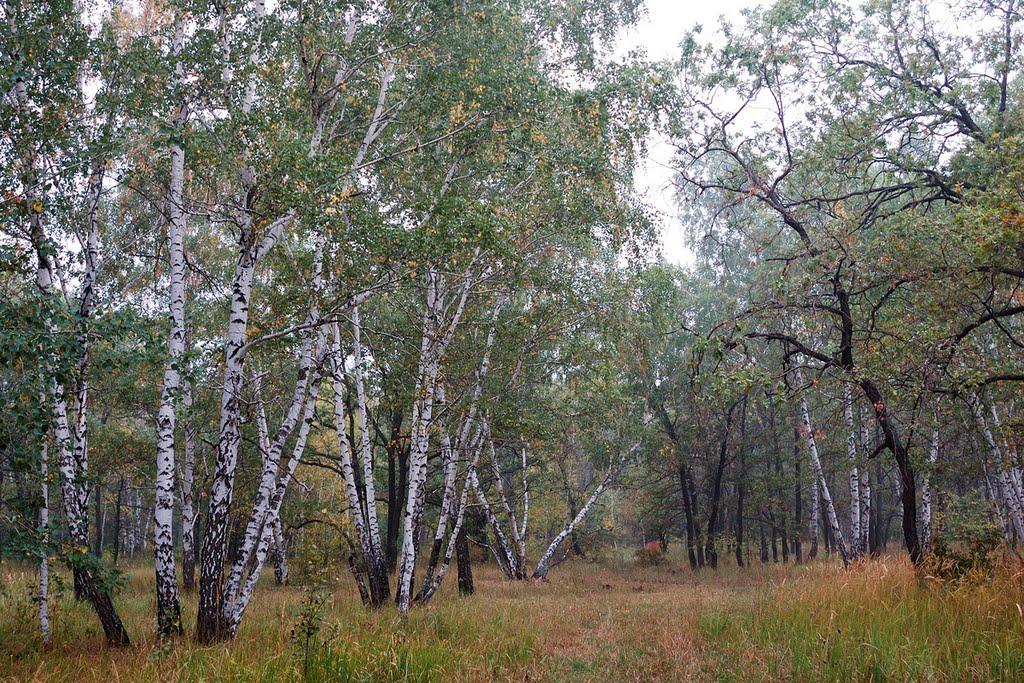 Буркинский лес
