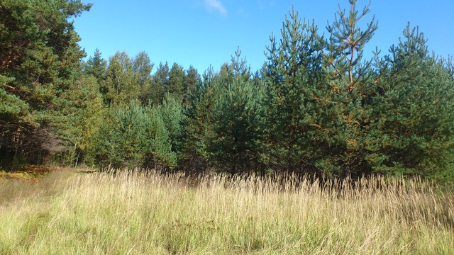 Лес Казённый