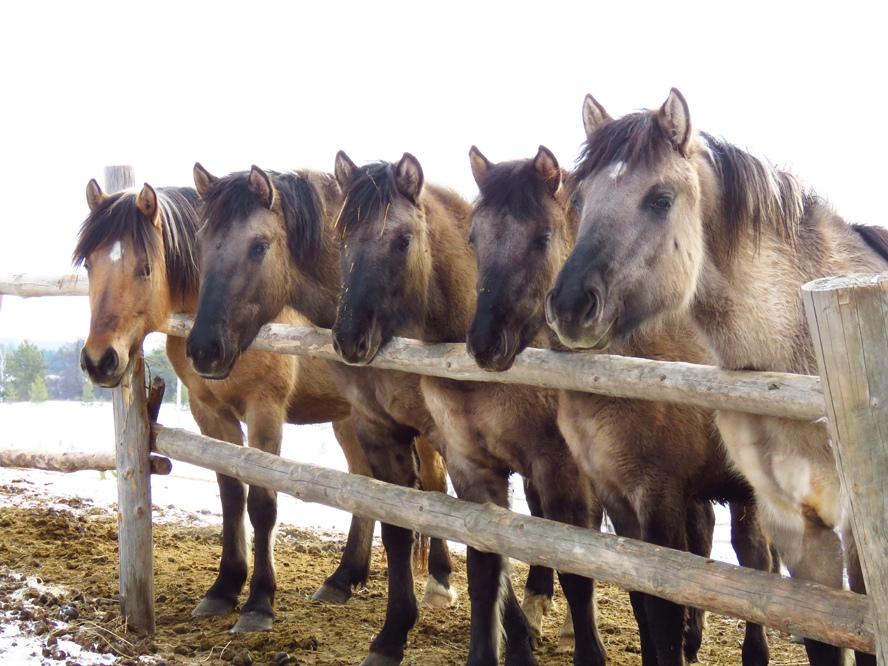 """Конно-туристический клуб """"Добрая Лошадь"""""""
