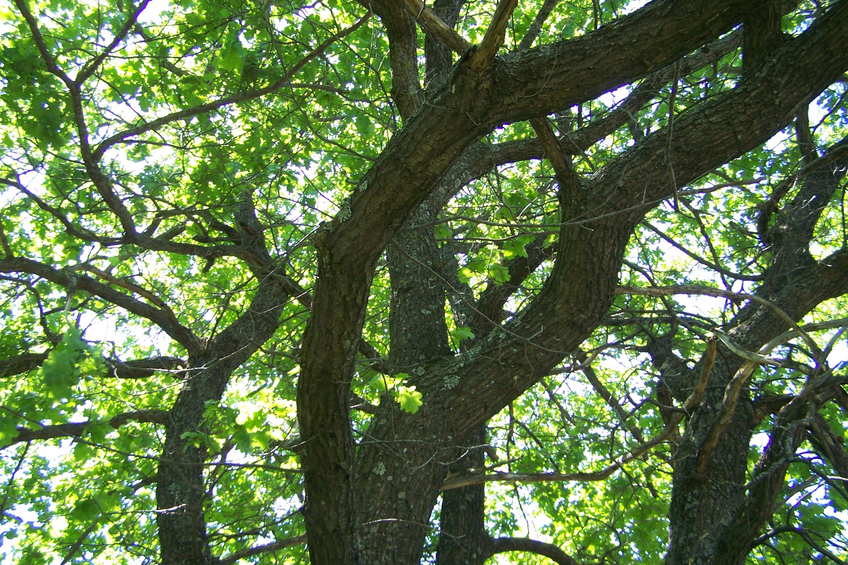 Усовский лес в устье Терешки
