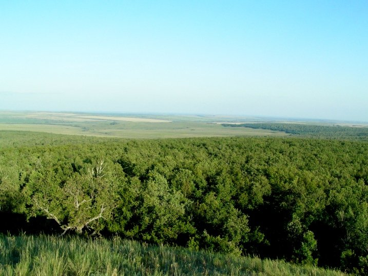 Леса у горы Попова шишка