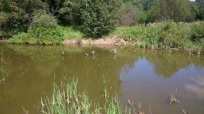 Кокуринский пруд