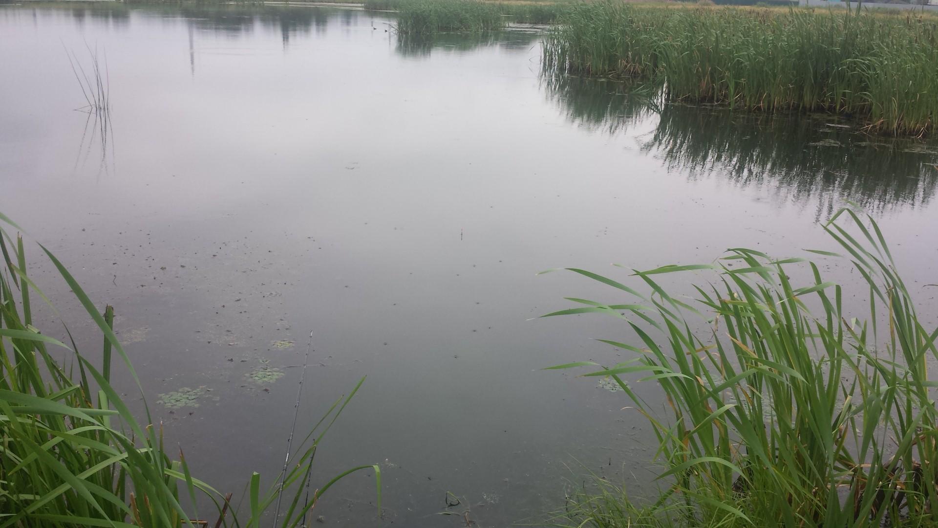 Македоновский пруд