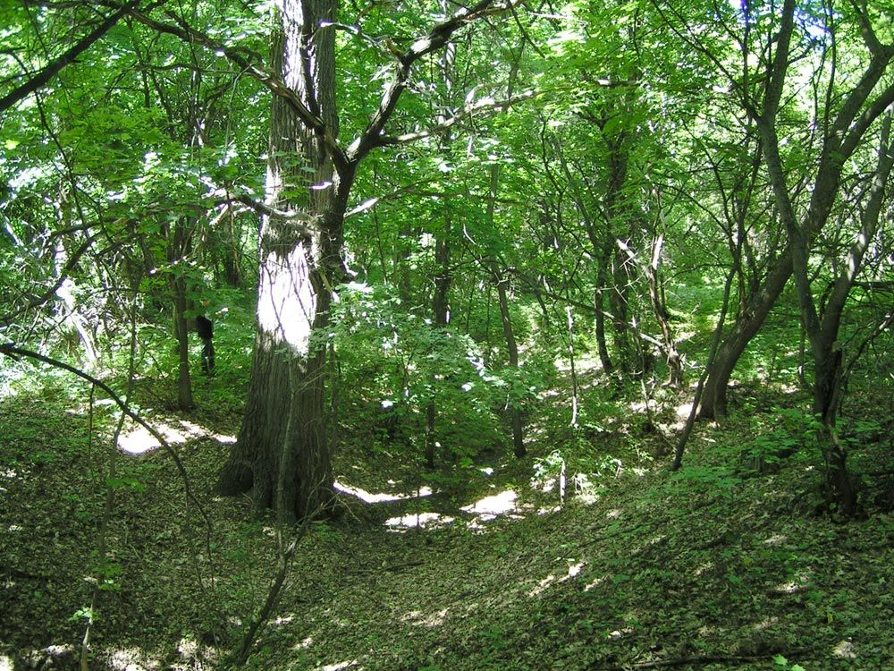 Приусадебный парк усадьбы Шахматовых