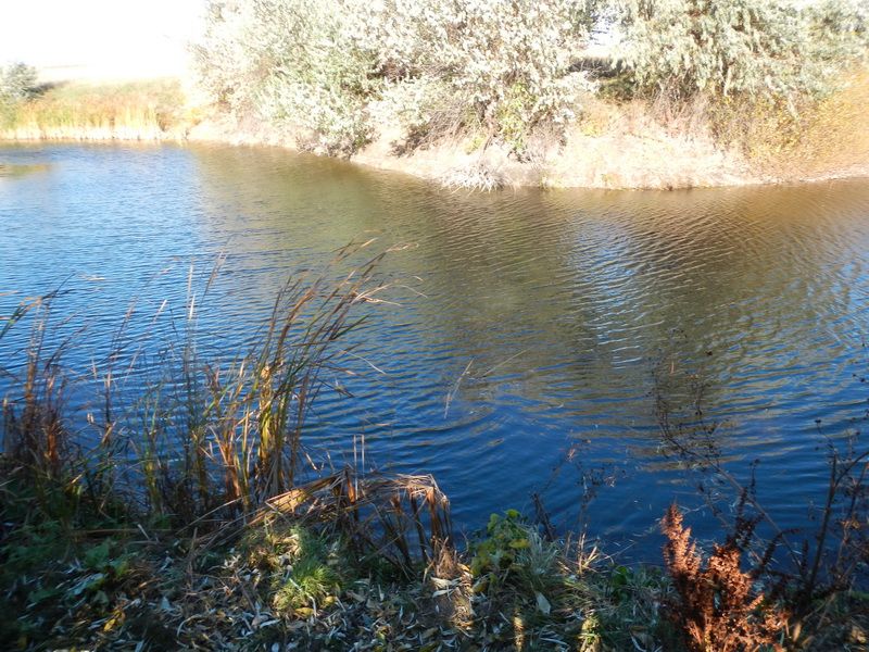 Новоантоновский пруд