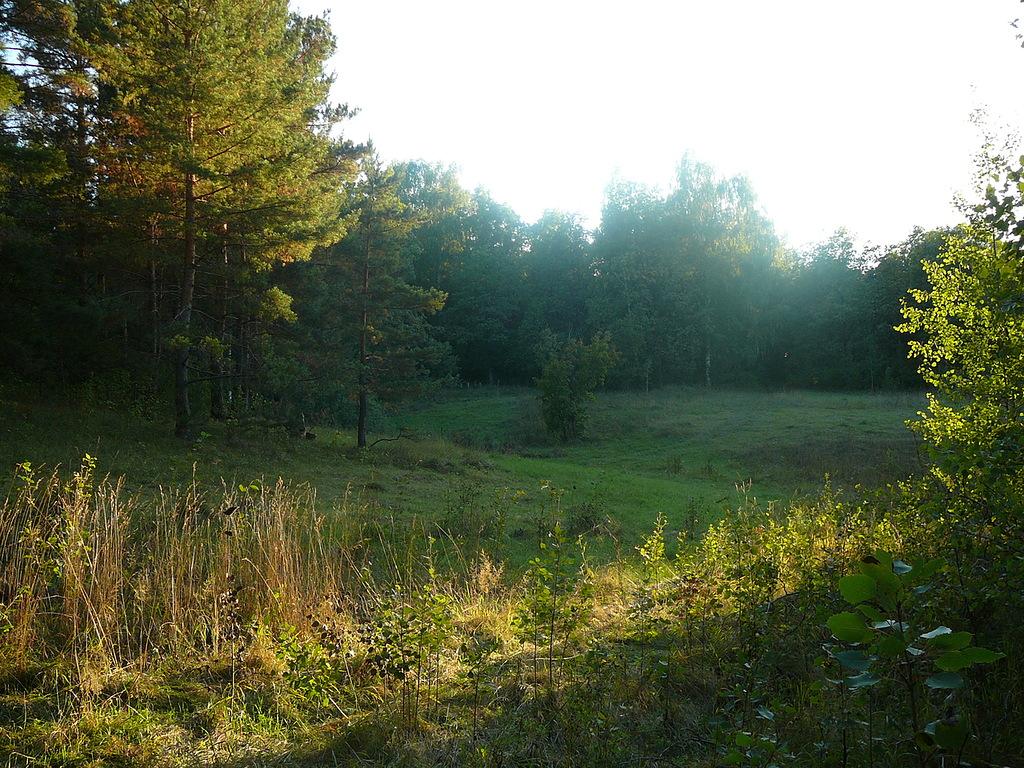 Лес у Садовки