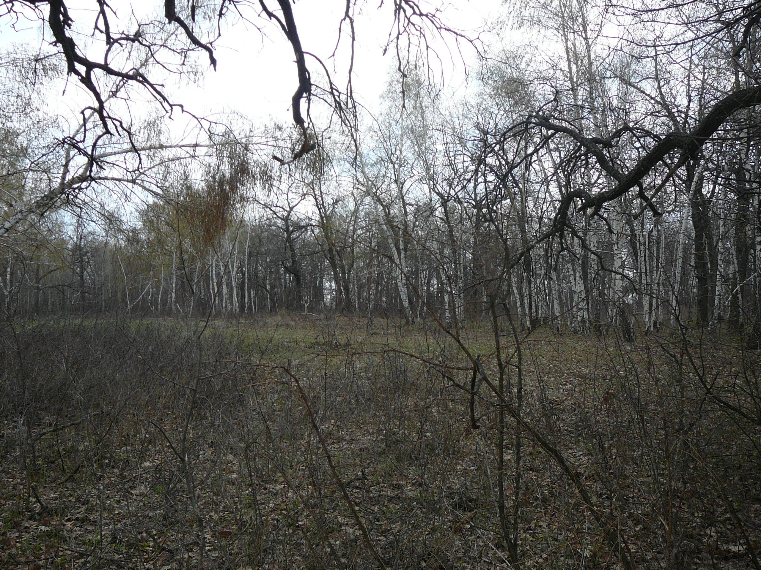 Долгий лес