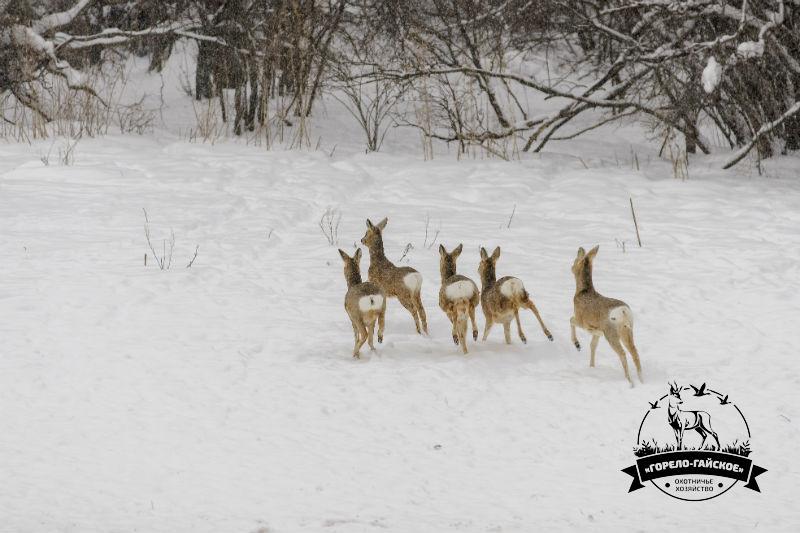 Охотничье Хозяйство «Горело-Гайское»
