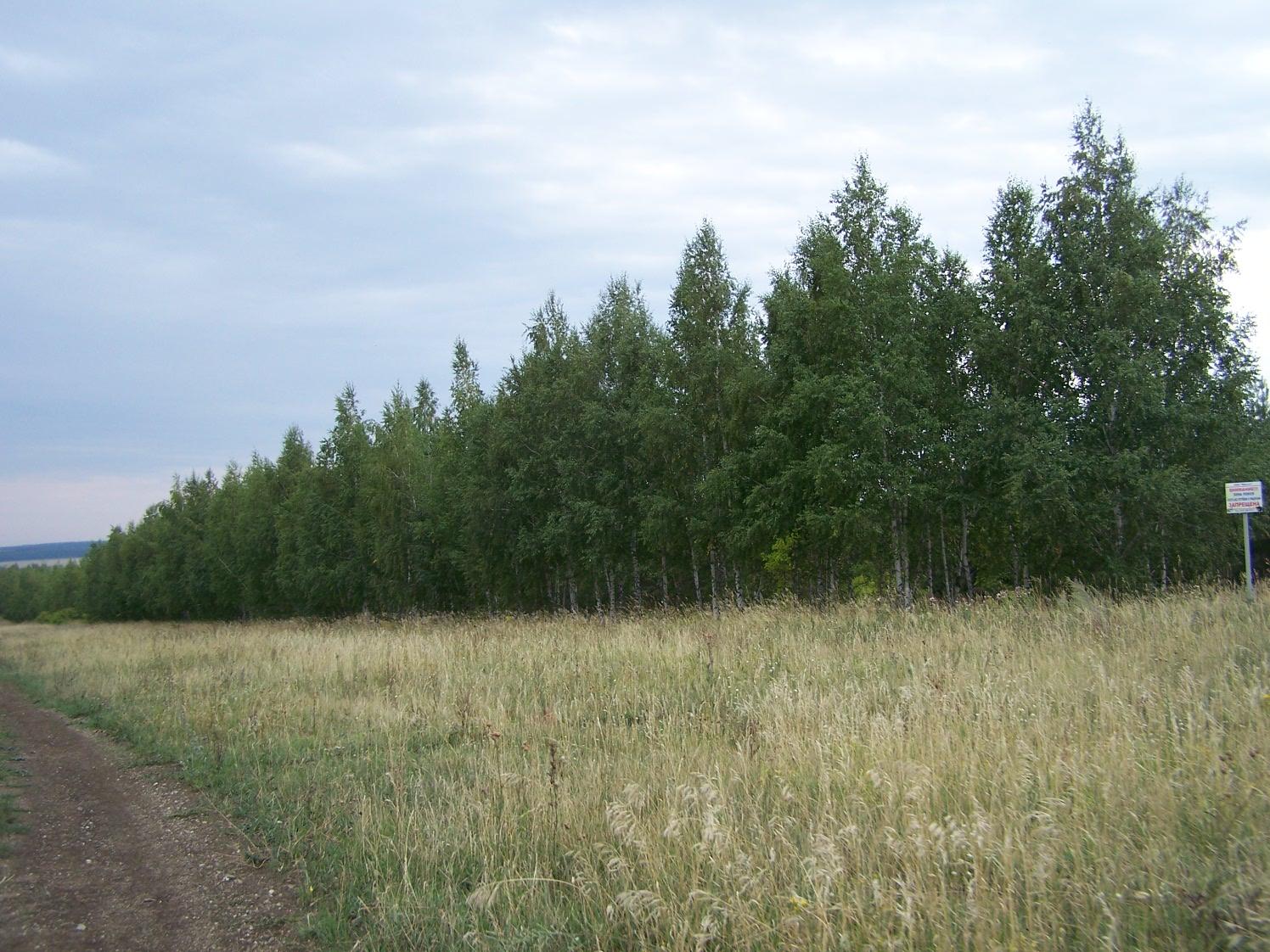 Лес Большой Суходол