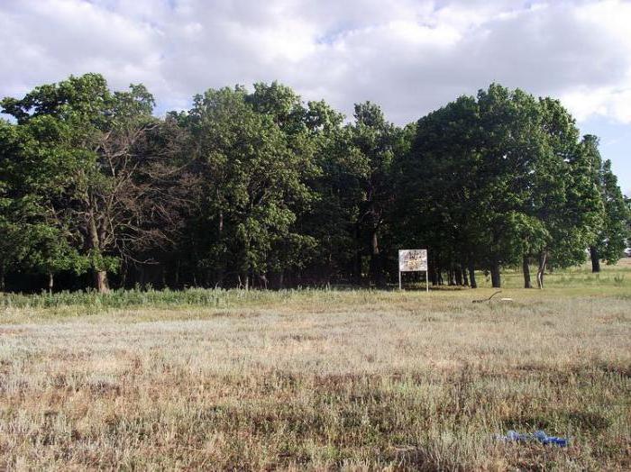 Большеивановский приусадебный парк