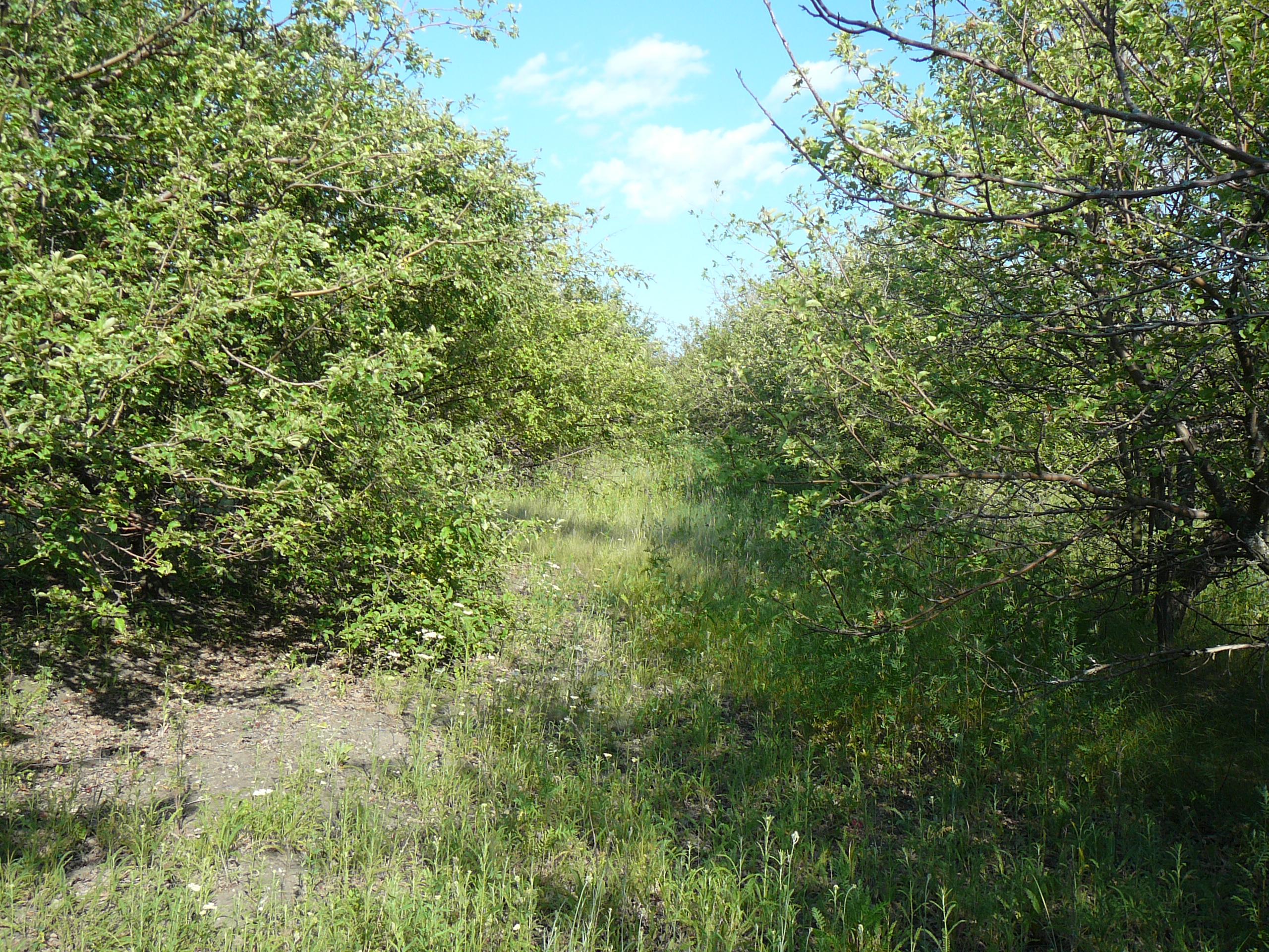 Яблоневые сады