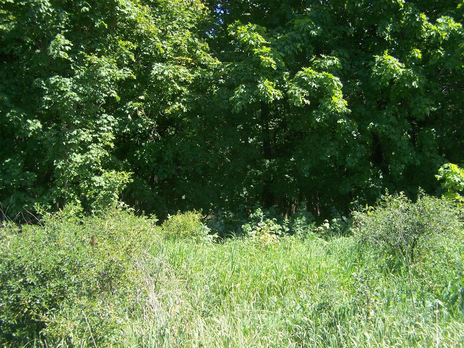 Воровской лес