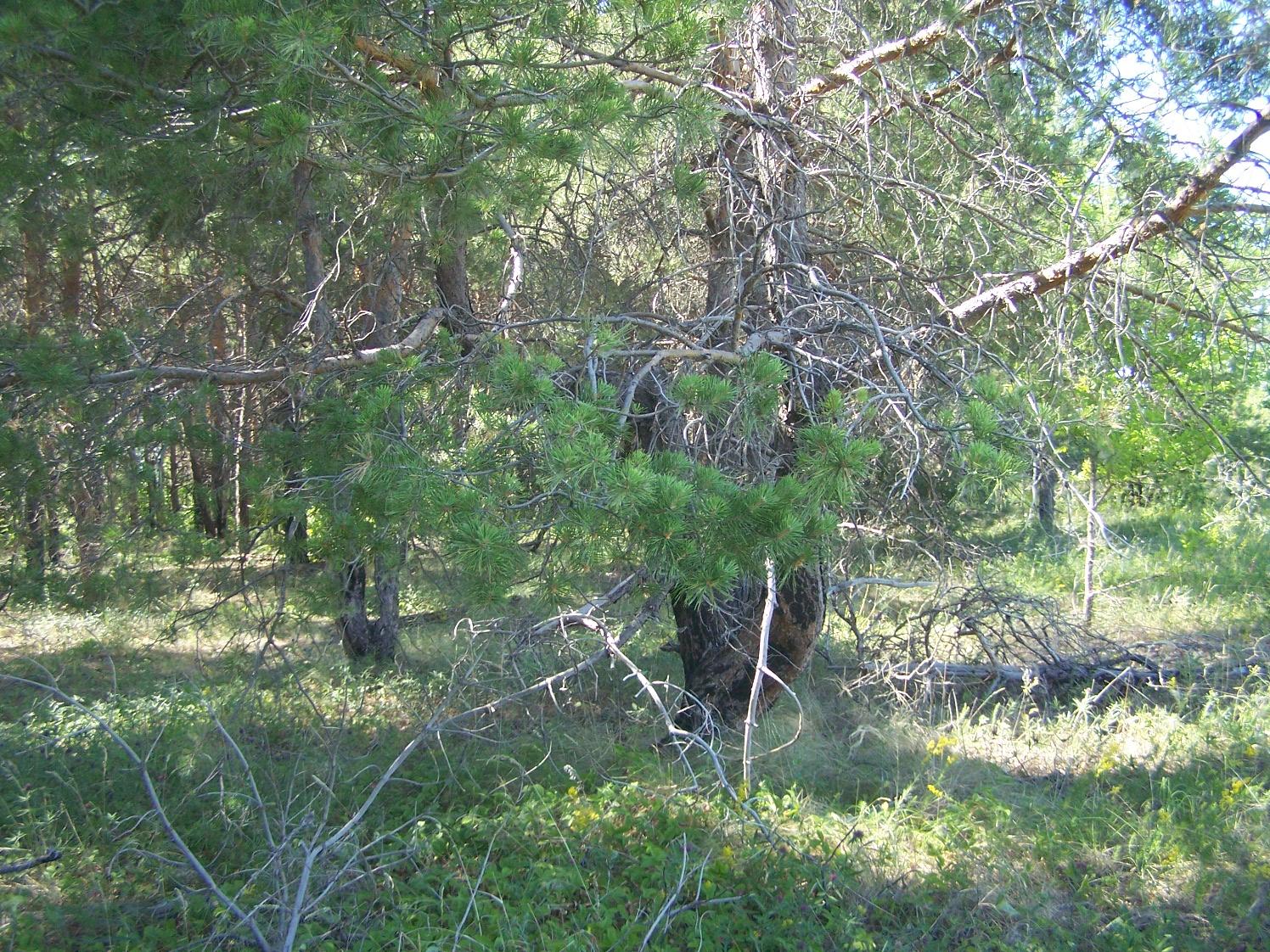 Перепелкин лес