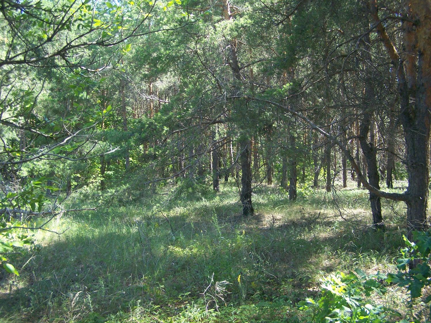 Карабулакские лесопасадки