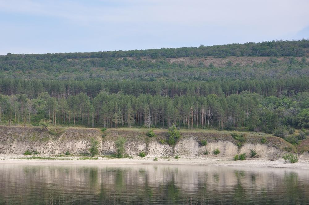 Змеевогорский лесной массив