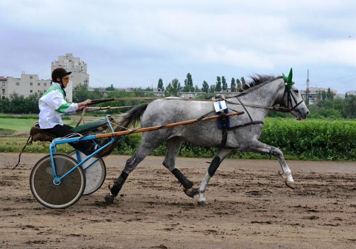 Саратовский Ипподром аренда лошадей