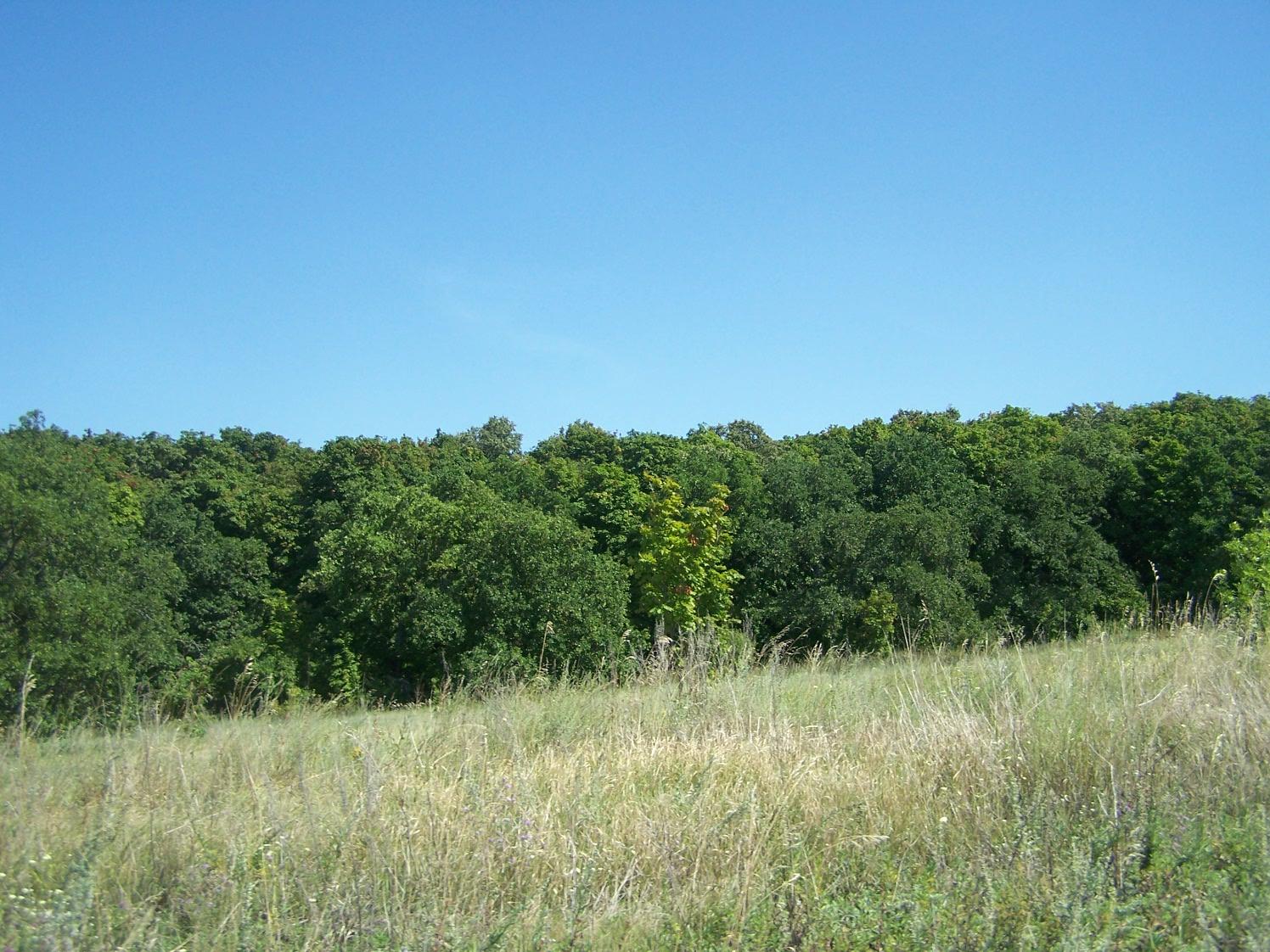 Новоалексеевский лес