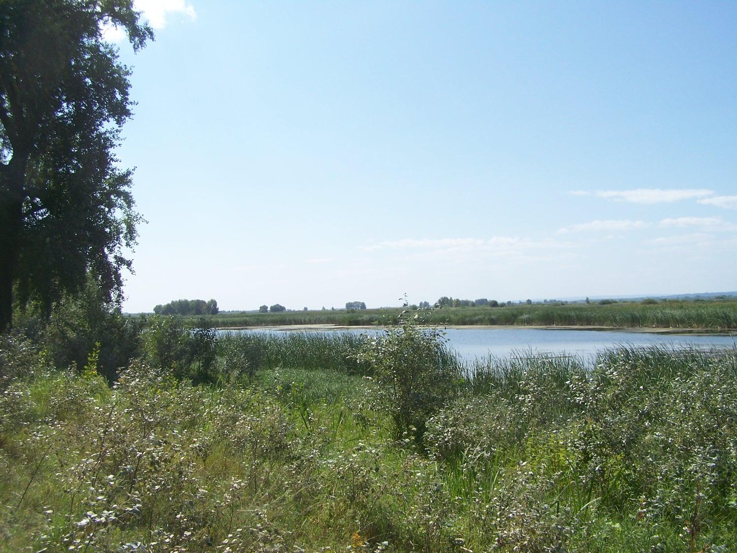 Красноярские протоки
