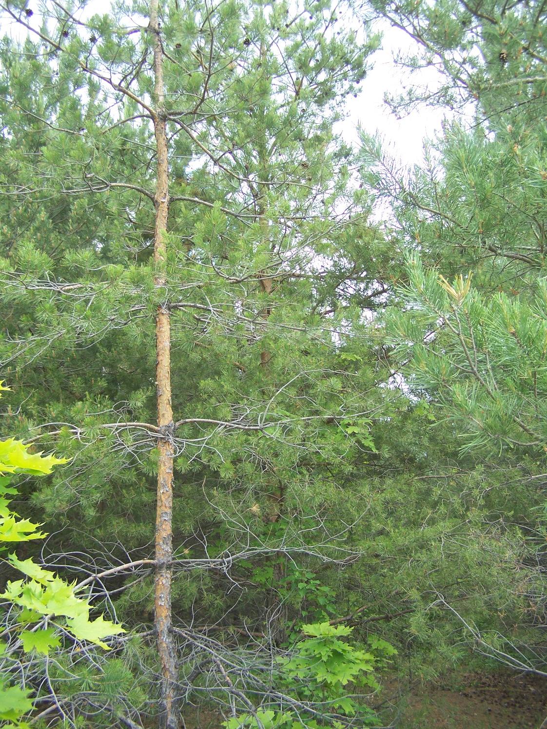 Урицкие леса