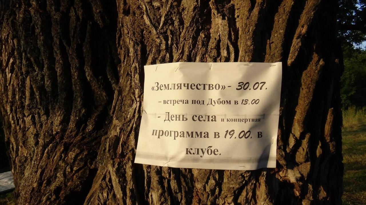 Земляческий дуб