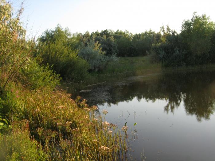 Староивановский пруд