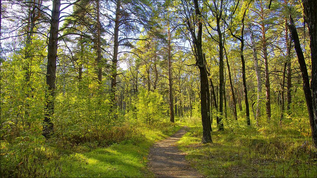 Устькараманский лес