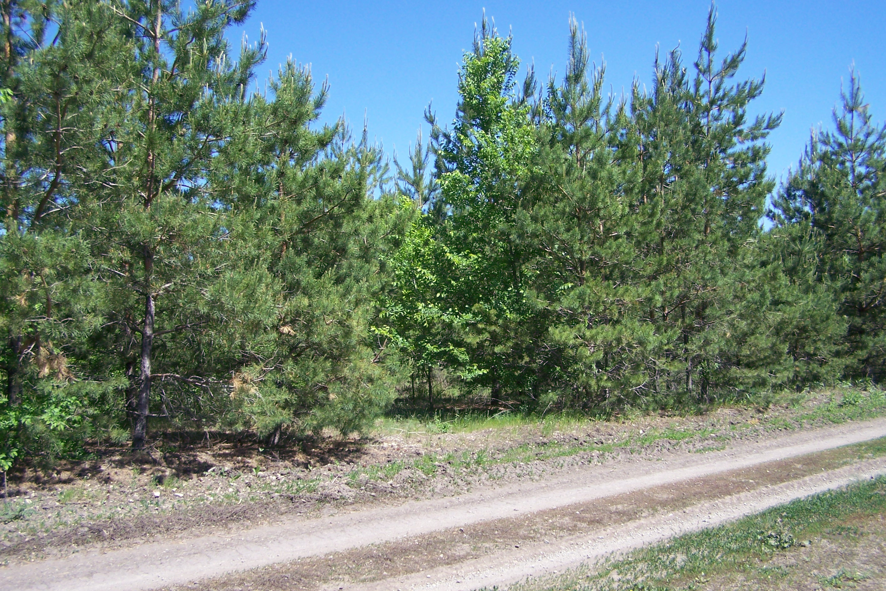 Букатовские леса