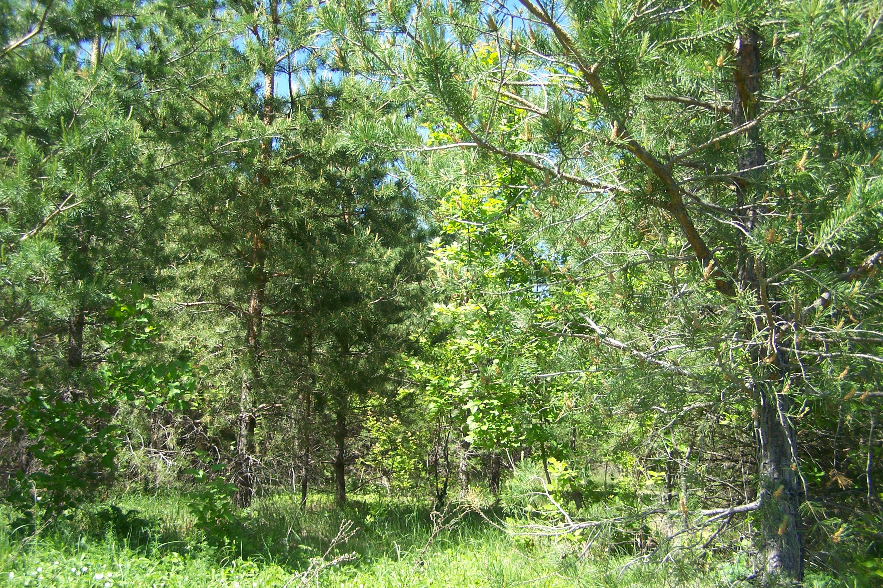 Лес Березняки