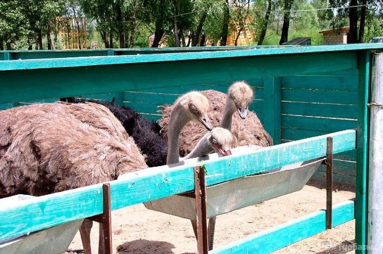 """Страусиная ферма с мини-зоопарком базы отдыха """"Избушка"""""""