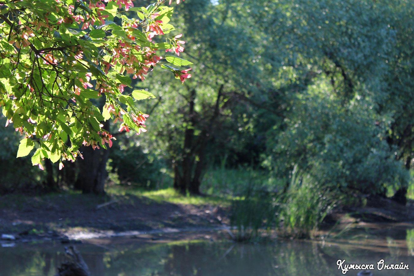 Русалий пруд