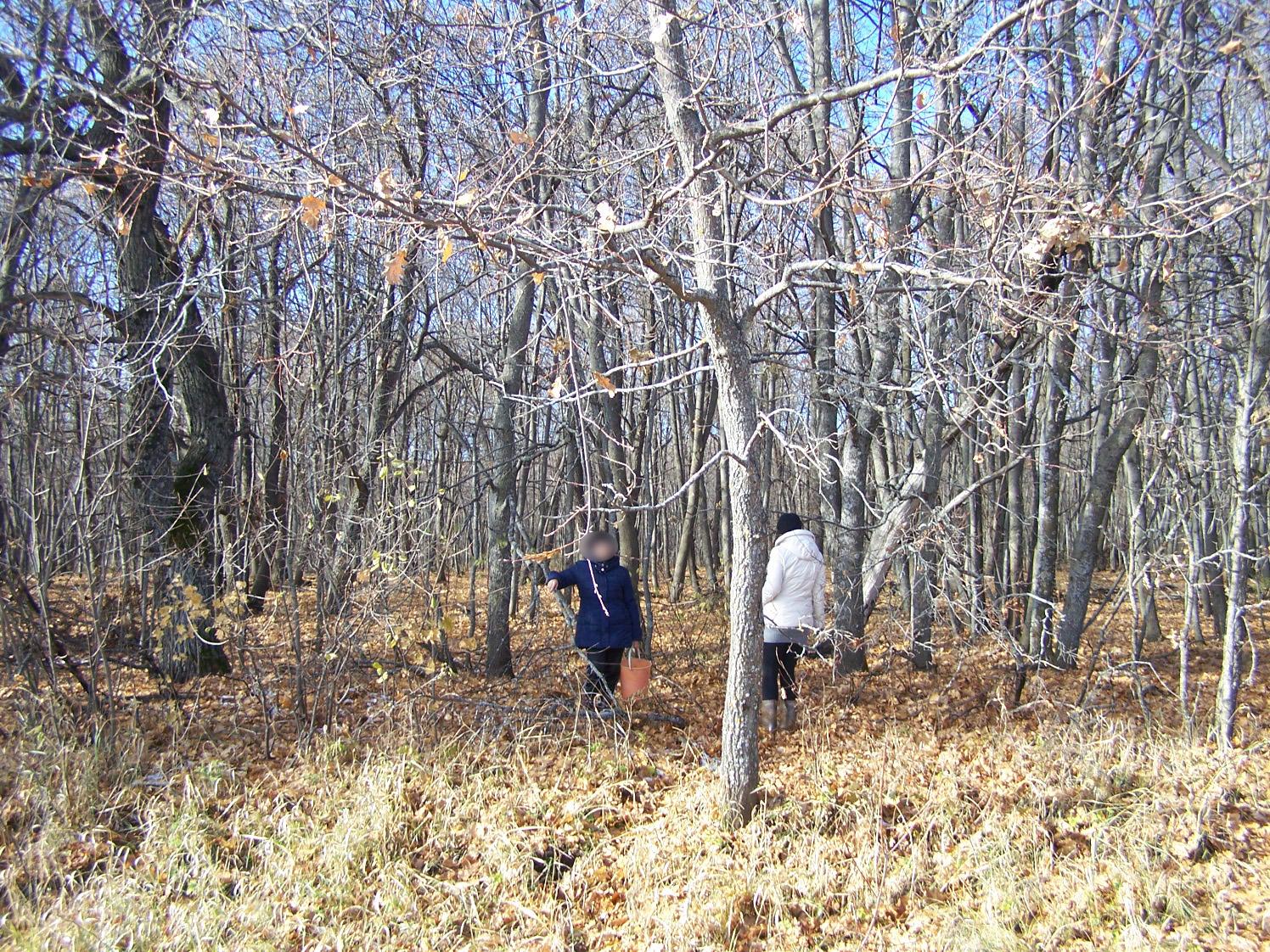 Лес на Голицынской горе
