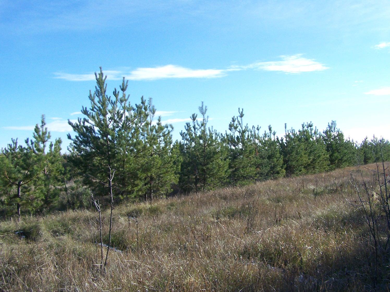 Карабулакский сосняк (Рябиновый лес)