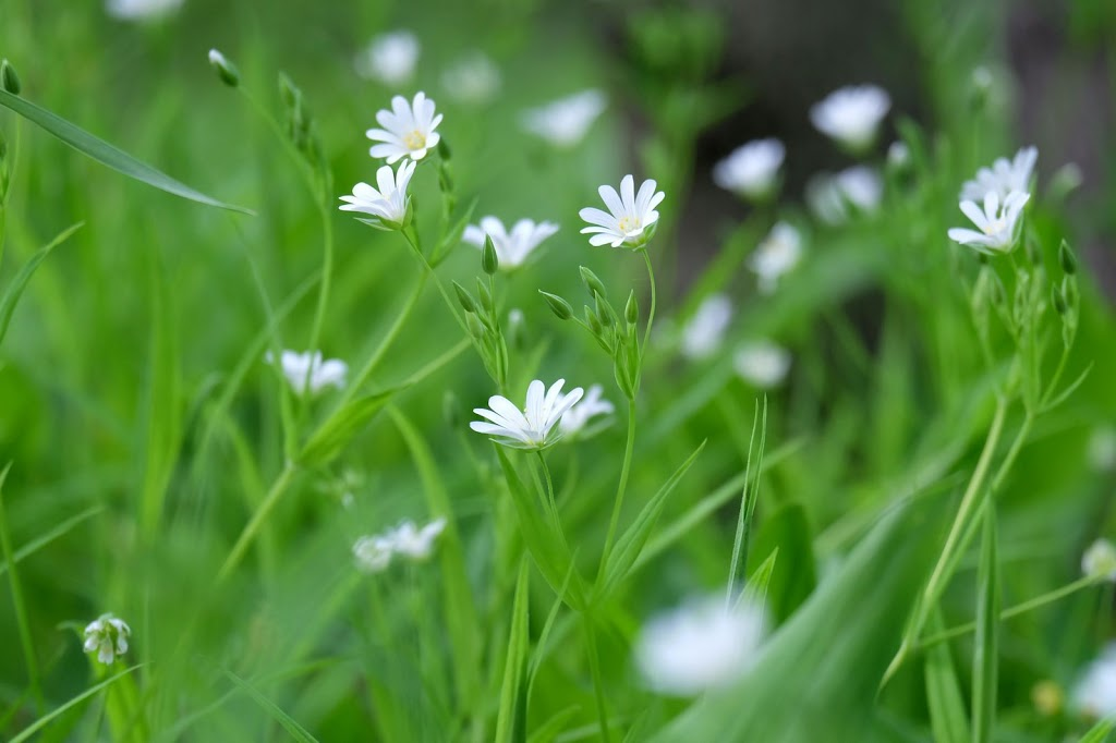 Душистая поляна