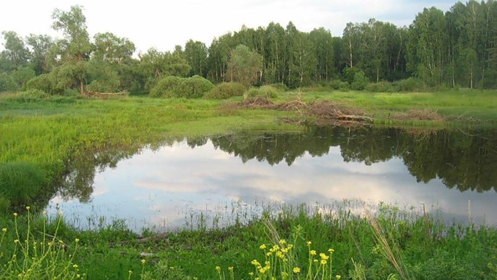 Моховое болото