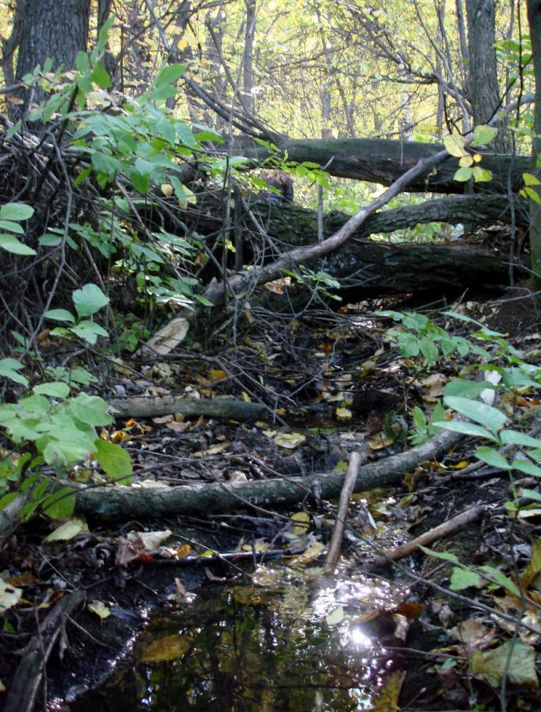 Злобовский лес
