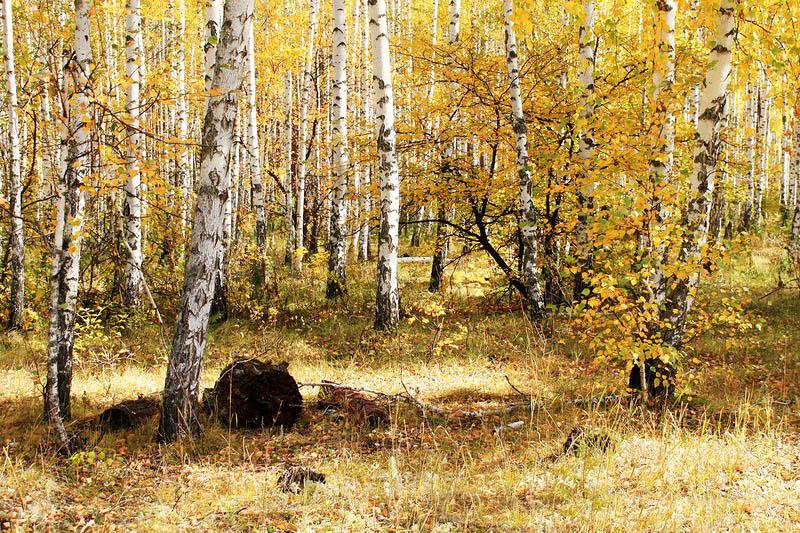 Базарно-Карабулакский лес