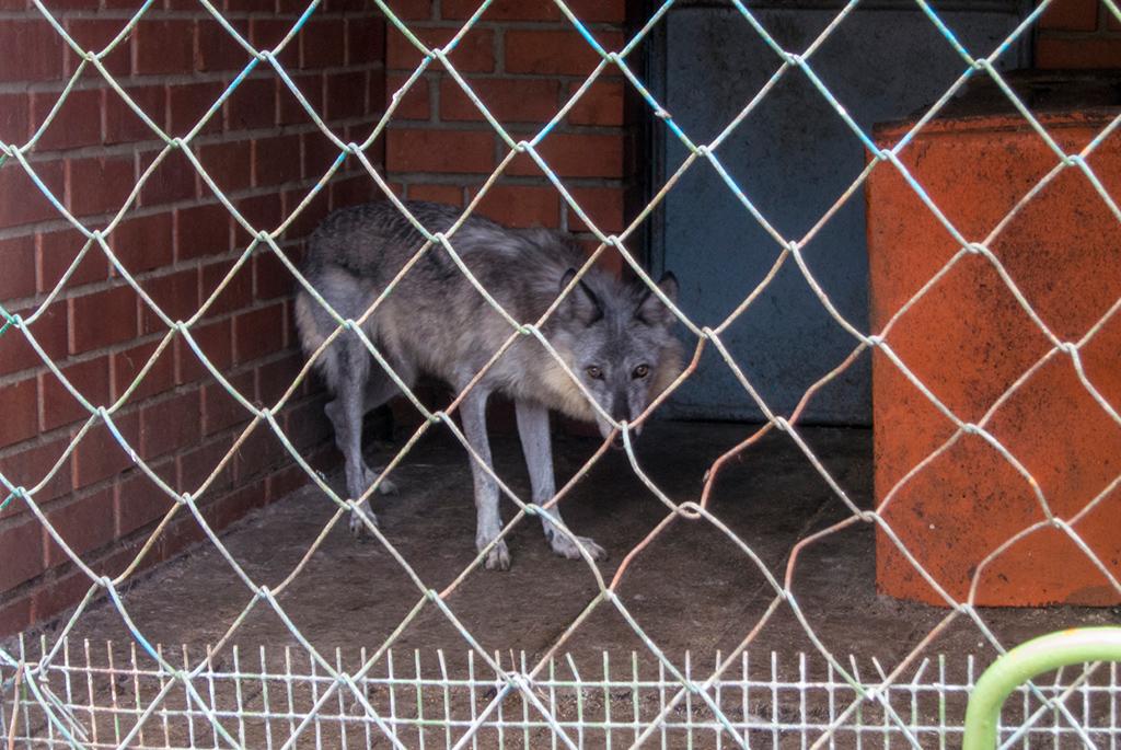 Аткарский зоопарк