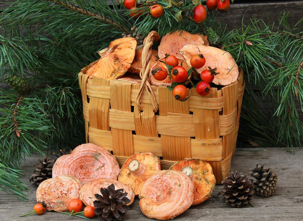 50 лучших грибных мест Саратовской области