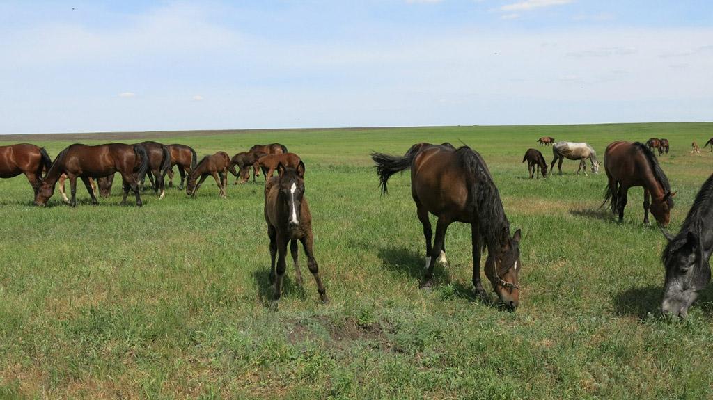 Еланский конный завод