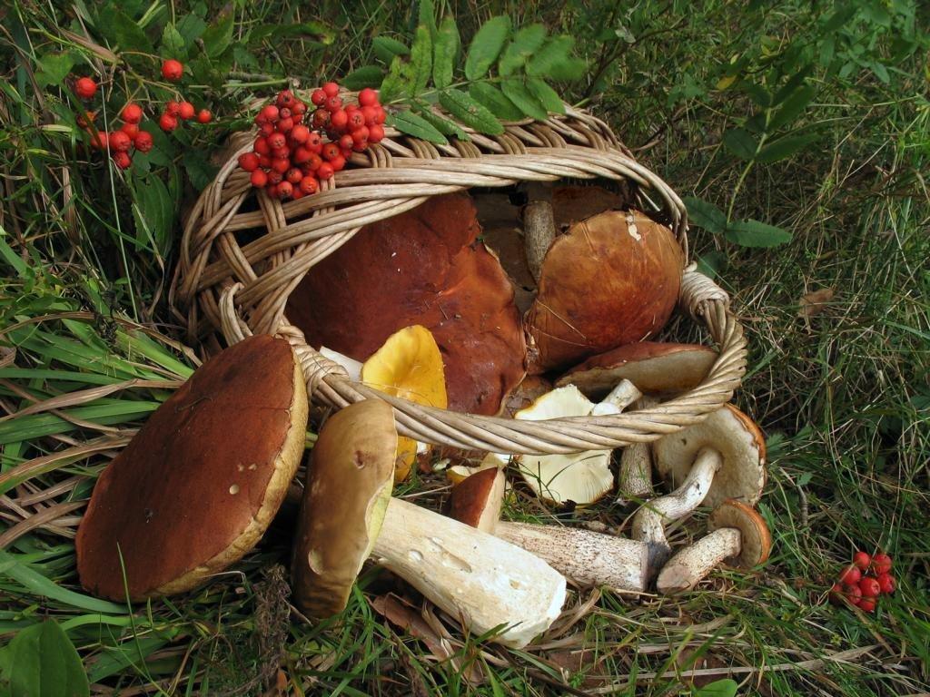 Лучшие грибные леса Саратовской области