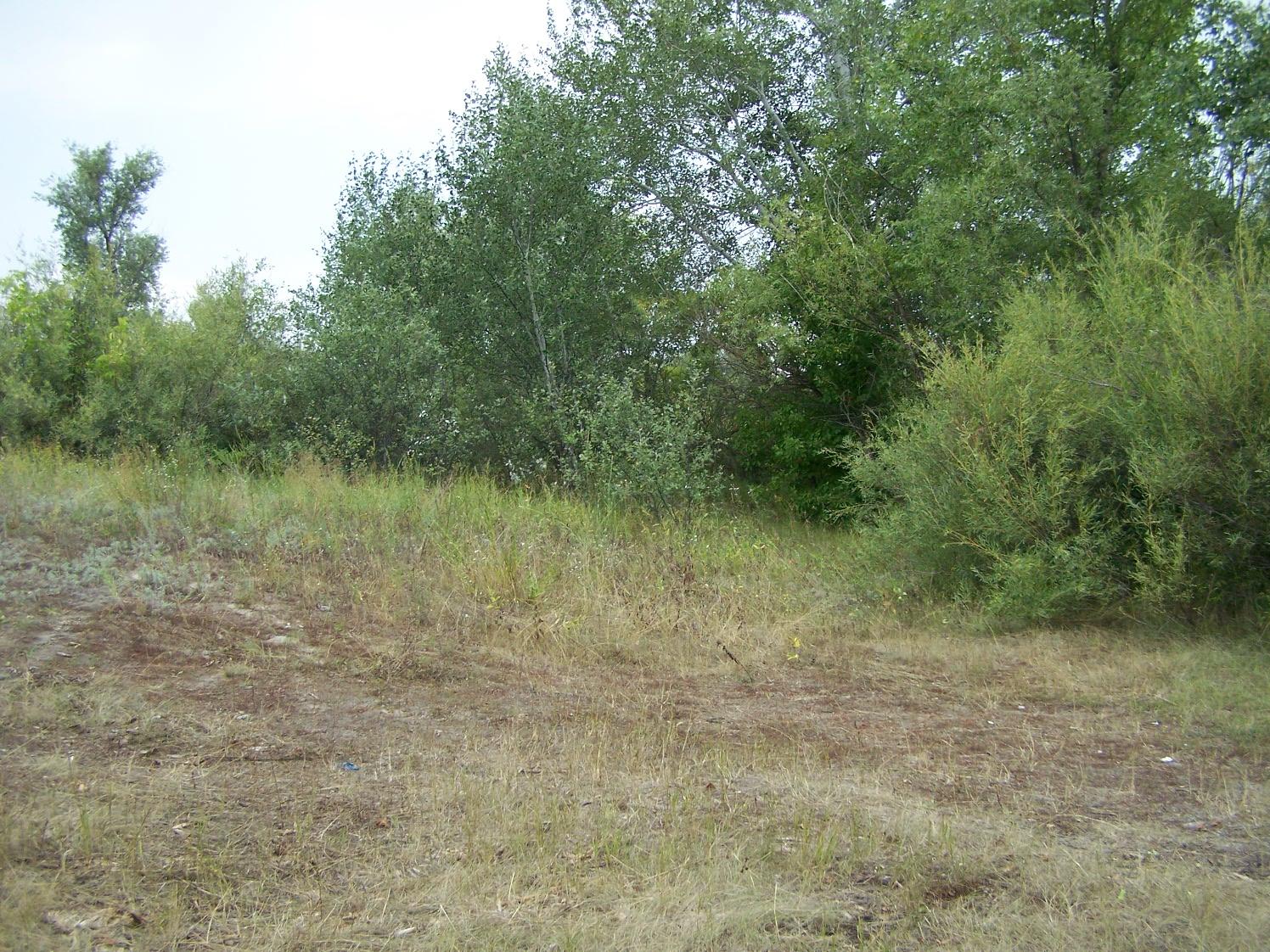 Большая Комаровская поляна