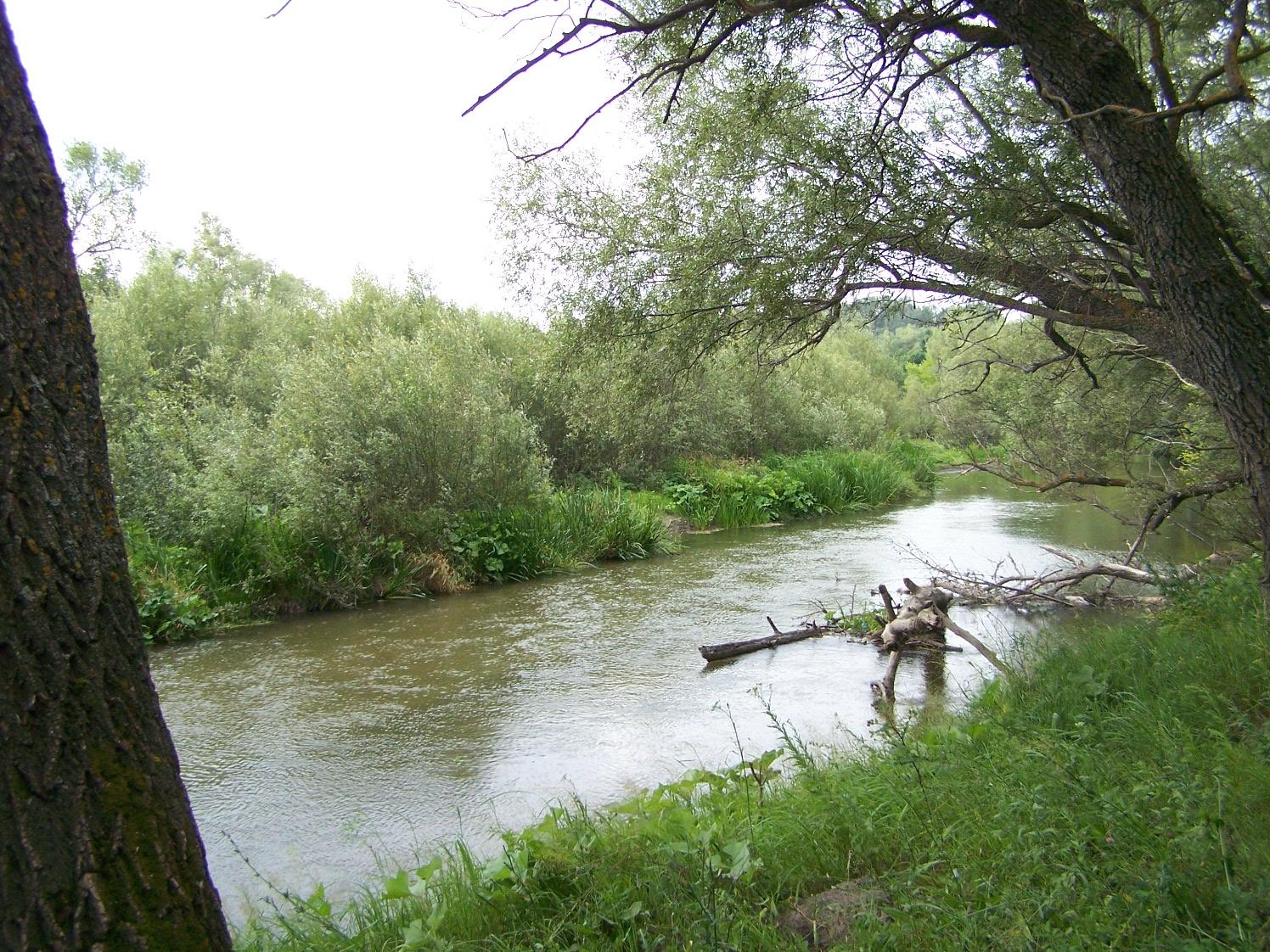 Берег реки Терешки