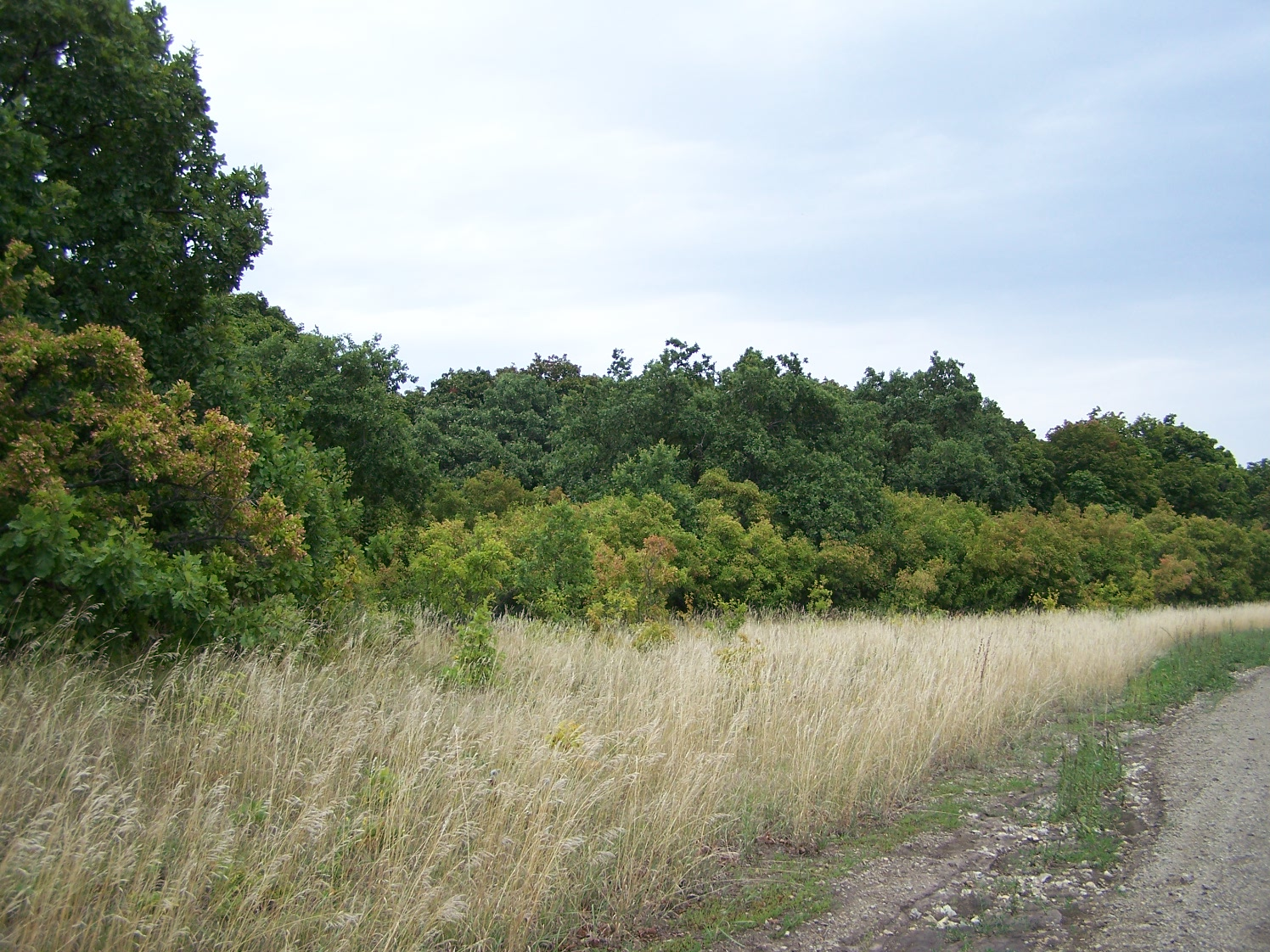Лес Малый Суходол
