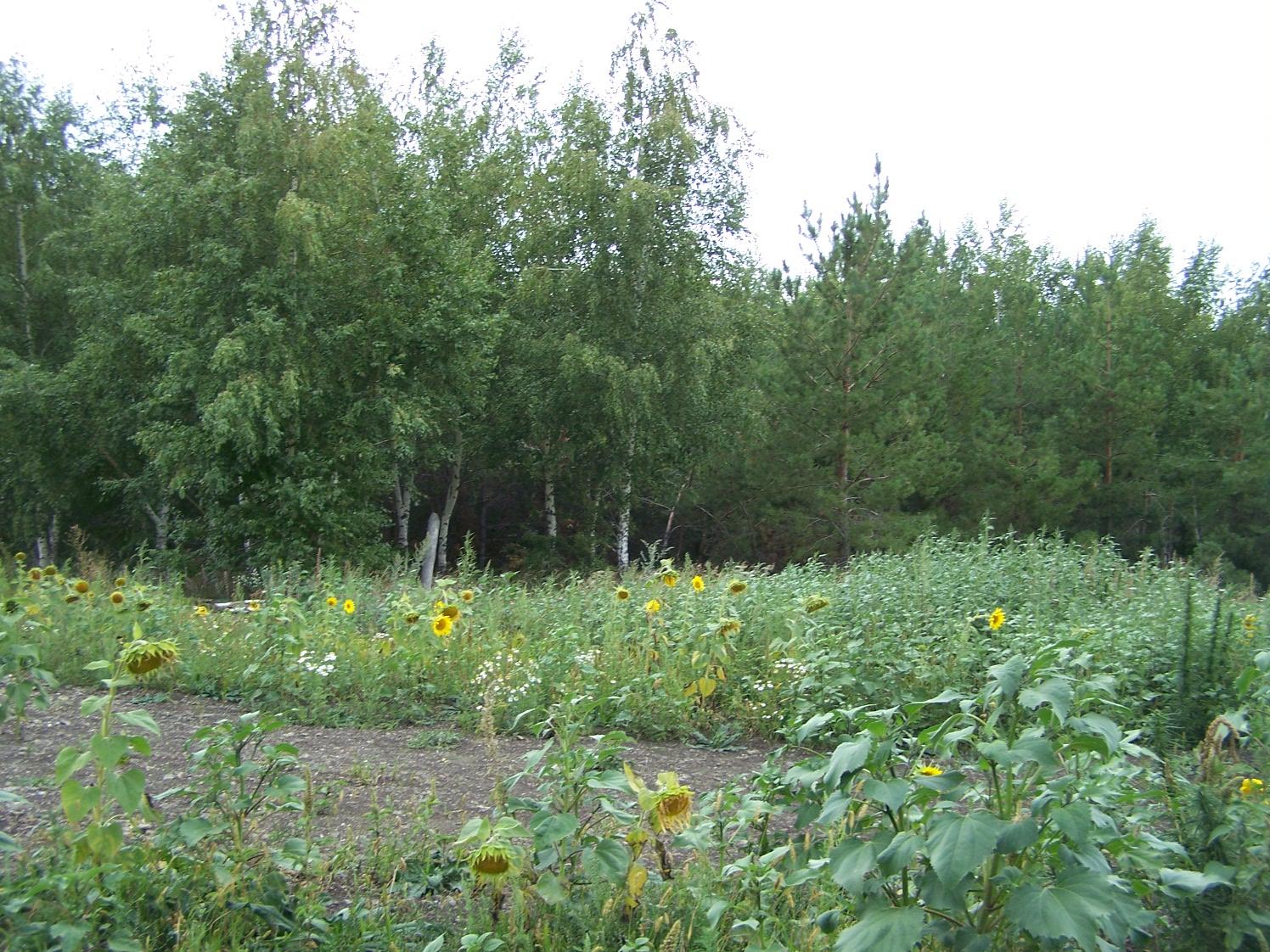 Лес Брусничный Суходол
