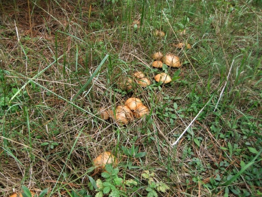Ершовкские леса