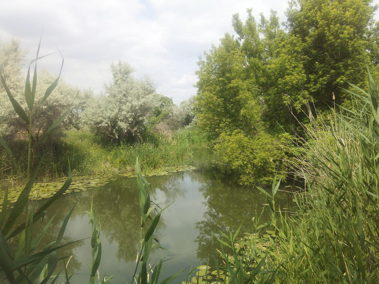 Курдюмская поляна