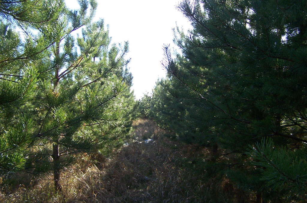 Марксовский лес
